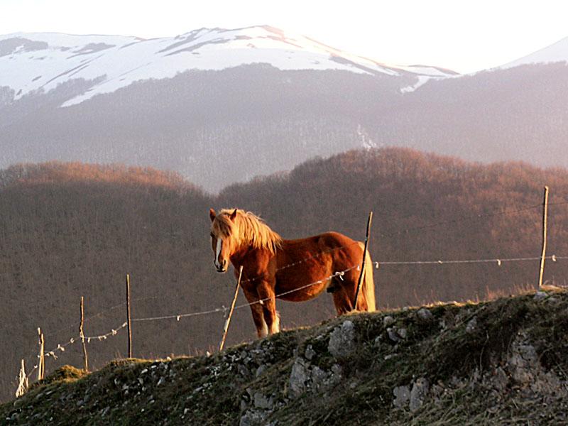 Cavallo [1]