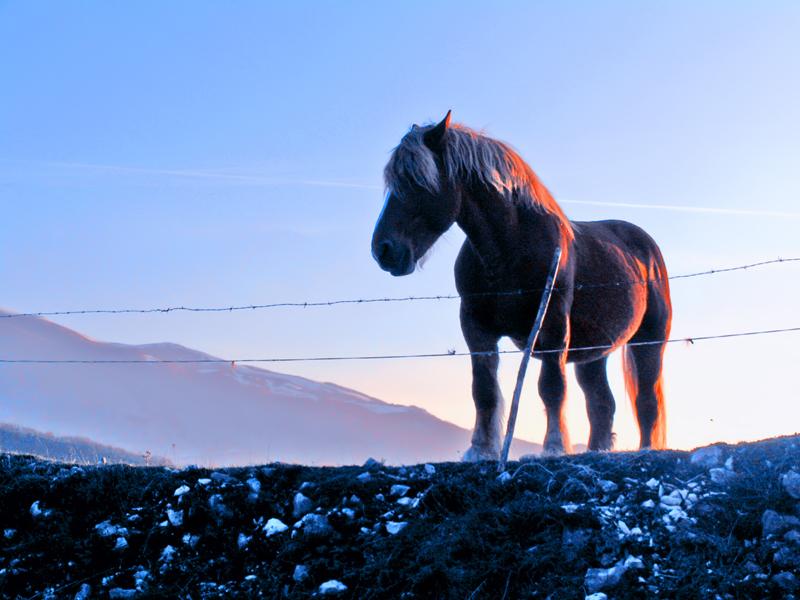 Cavallo [2]